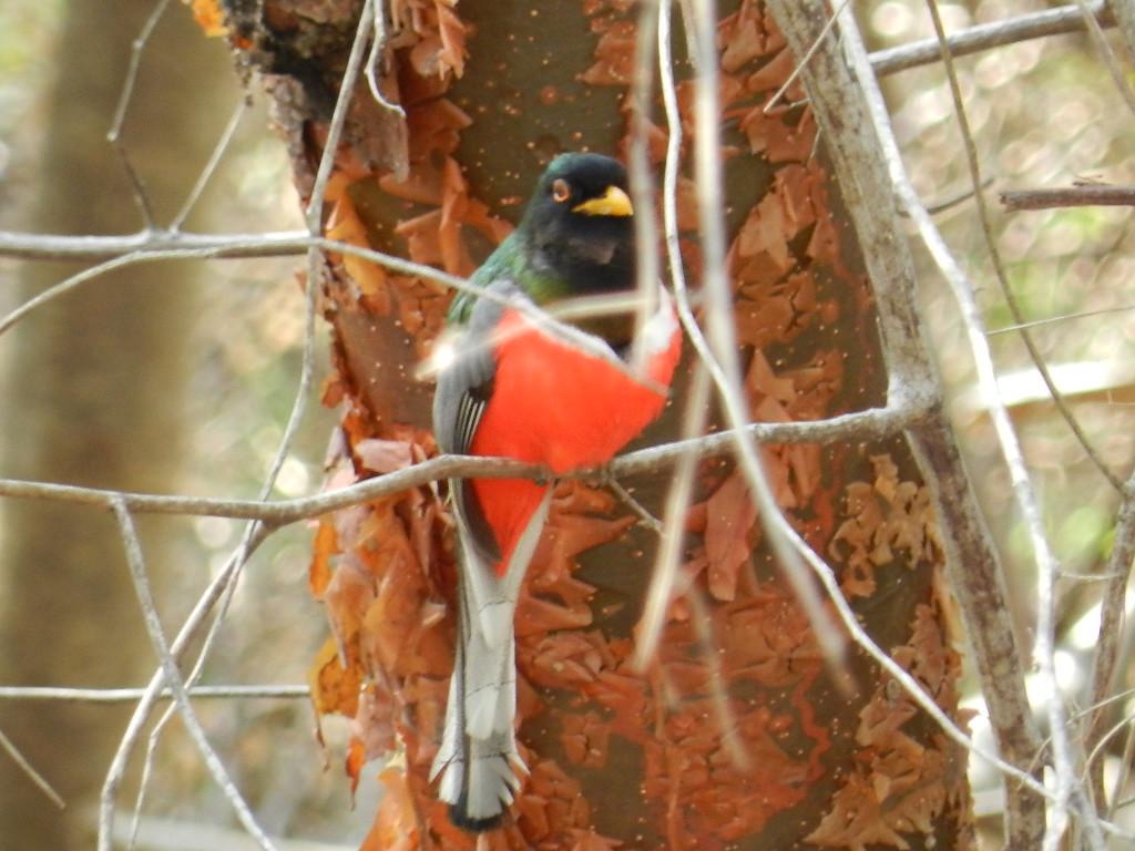 Mar al Cielo Eco-Retreat, bird watching, birds, birdwatching, eco-tours, eco-adventure, accommodations, hotel, Lo de Marcos, Riviera Nayarit, Mexico, near Puerto Vallarta