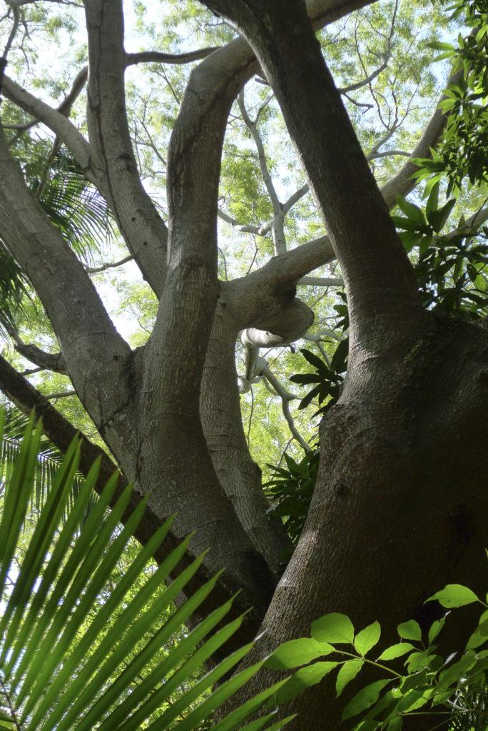 Mar al Cielo Eco-Retreat, jungle, Mexico Coast, Pacific, Oceanfron, Bird watching, Wildlife viewing, private, Lo de Marcos, Riviera Nayarit